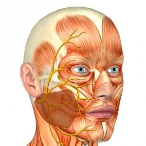 неврит лицевого нерва лечение