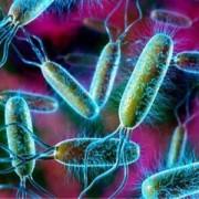 Признаки и симптомы дисбактериоза кишечника у взрослых. Правила лечения расстройства работы желудочно-кишечного тракта.